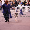 Dog Shows : 17 galleries with 3169 photos
