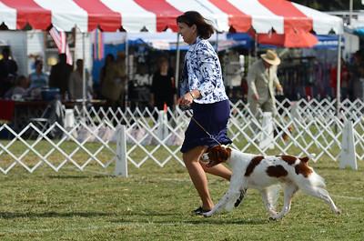 Select Dog Dillon, GCH CH Ory's Marshall Dillon SH