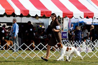 Reserve Winners Dog Exebrit's Sierra Storm