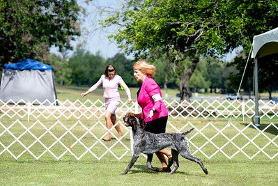 2016 German Shorthaired Pointer Club of Riverside Specialties