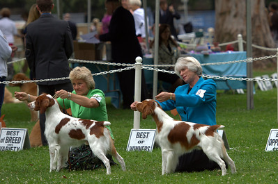 Best of Breed and Select Dog