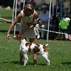 GCH Brigade's Hi Hopes Rocket JH  Select Dog