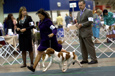 GCH Brigade's Hi Hopes Rocket JH