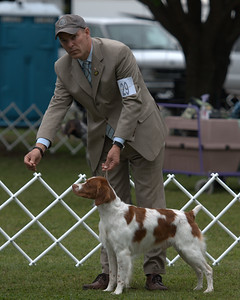 SEL  29 CH BRIGADE'S HI HOPES ROCKET JH , SR41073501 3/10/2007. Breeder: Michael Frane. By FC AFC Burford's Booked First Class -- Maison De Chasse Magnifique. Deborah and Michael Frane . Dog