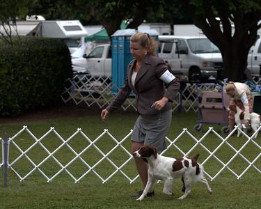 1/W/BW       14 BRITTANY'S RAMBLIN' TWILIGHT , SR63681802 7/16/2010. Breeder: Lani Ann Emanuel & Jenelle Larson. By CH Britt's Ramblin' Bet the Three-Spot -- CH Britts Ramblin' Eliza Doolittle. Jenelle and Nancy Larson