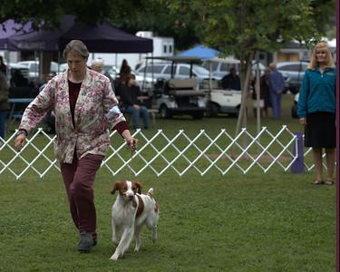 39 GCH GAITWAY-SANDBAR SILVER SPOON , SR32428004 2/23/2006. Breeder: Leah Shirokoff. By CH Sandbar's Casanova -- CH Gaitway To Infiniti. Leah Shirokoff . Dog.