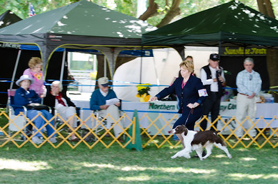 MILLETTE'S WHAT CAN BROWN DO FOR YOU. SR 61173703. 01-31-10 By Ch Millette's A Tri To Watch - Ch Mich's Mt Dori Ready Set Go.  Owner: Terri Bray & Michelle Millette, Carmichael, CA 956083769. Breeder: Arlene McCabe & Michelle Chaney.