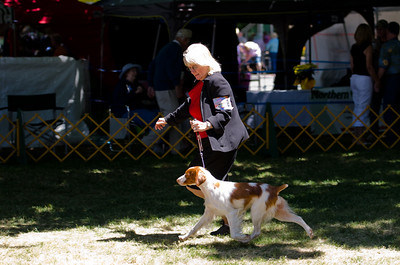 MICHS MT MYSTICAL MAGICAL PENNY LAN. SR 60601001. 01-12-10 By Ch Mich Mt The Suspense Is Over - Ch Mich Mt Tri Fooling Pippin. Bitch.  Owner: Michelle Chaney & Jaime E Tellier, Napa, CA 945585513. Breeder: Michelle Chaney.