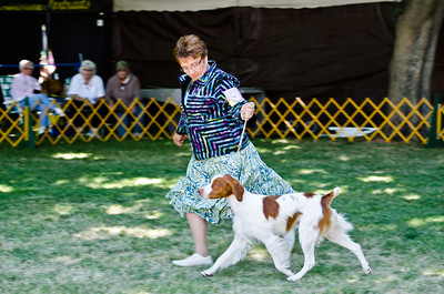 WOLRAM'S GONE WITH THE WIND. SR 63552202. 07-29-10 By Ch Wolram's Riverboat Gambler JH - Wolram's Turquoise Ridge Joule.  Owner: Patricia Molini & Suzanne Marlow, Sparks, NV 89431. Breeder: Suzanne Marlow.