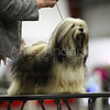 Dog Shows : 1 gallery with 103 photos