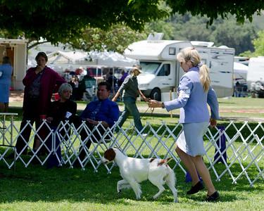 WHISPER RIDGE LAST DANCE , SR63975601 4/8/2010. Breeder: Sue Richards & Stephanie Kepler. & J. Larson By CH Britt's Ramblin' Bet The Three-Spot -- CH Brittany's Ramblin' My Madera, JH. Sue C. Richards & Stephanie Kepler . Bitch.