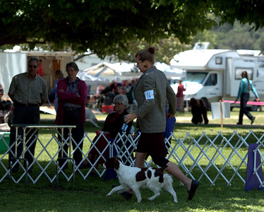 BRITTANY'S RAMBLIN' TWILIGHT , SR63681802 7/16/2010. Breeder: Lani Ann Emanuel & Jenelle Larson. By CH Britt's Ramblin' Bet the Three-Spot -- CH Britts Ramblin' Eliza Doolittle. Jenelle and Nancy Larson . Bitch.