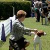 TRU'S LUCKY CHARM , SR63947703 7/21/2010. Breeder: Marc and Vicki Rittner. By DCH Rusty Ridge Lucky Strike -- CH Tru's Jump N Jada. Marc & Vicki Rittner . Bitch.