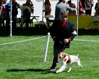 GCH GAITWAY-SANDBAR SILVER SPOON , SR32428004 2/23/2006. Breeder: Leah Shirokoff. By CH Sandbar's Casanova -- CH Gaitway To Infiniti. Leah Shirokoff . Dog.