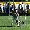 MIDAS SMOKE'S A BLAZIN' , SR51504204 8/23/2008. Breeder: Dale & Rosalie Shores. By CH, FC Megasmoke Grand Finale -- Midas Blazin' Amber Skies. Mark Ambre . Dog.