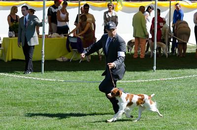 GCH BRIGADE'S HI HOPES ROCKET, JH , SR41073501 3/10/2007. Breeder: Michael Frane. By FC AFC Burford's Booked First Class -- Maison De Chasse Magnifique. Deborah and Michael Frane . Dog. Robert Scott, Agent.