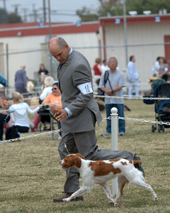 """Shiloh's Swift Kiss A Taq - Angel DC Redline's Tequila Moon x CH Swift River's Flashback """" Time JH Handler: Robert Scott Breeders: Pennie Peterson, Frances Phillips Owners: Mike and Deborah Frane"""