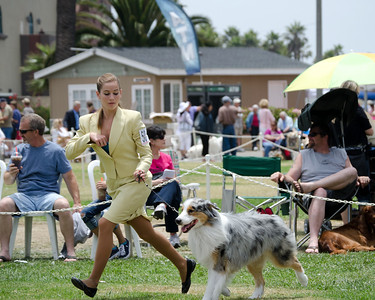 50 SECONDWIND GETTING OUTTA DODGE , DN25020104 4/12/2009. Breeder: Sherie Trusty. By Journey's End It's in the Jeans -- Secondwind Black Forest Dream. AUSTRALIAN SHEPHERDS Owner: Deanna Franciotti and Sherri Trusty. Jr. Handler: Meghan Fosenber,(27753860002)Dog.