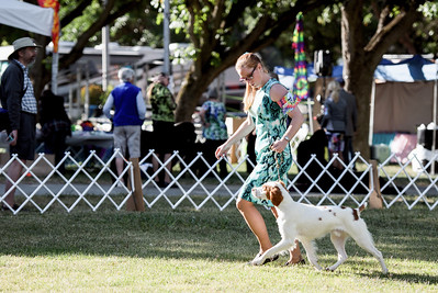 Woofstock 2016 - Northern California Brittany Club Specialty