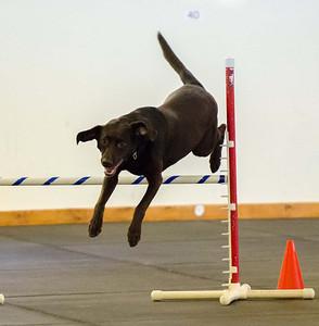 Dog Sports and Pet Portraits