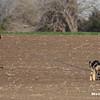 DFW_03-03-2012_Faisal_2