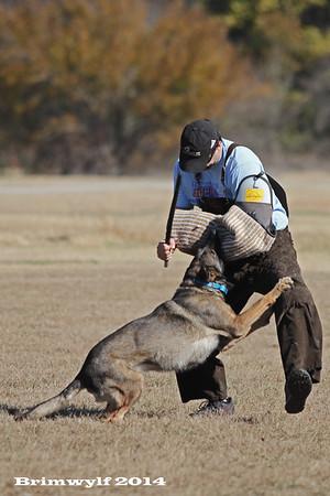DFW Working Dogs Training Nov 2014