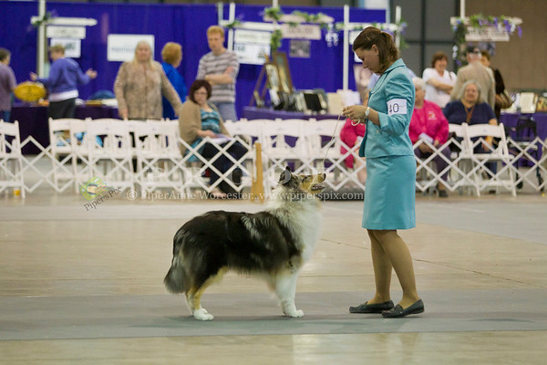 Collie Club of America 2011
