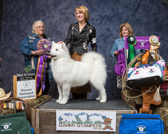 Denver Samoyed Club Specialty_2018