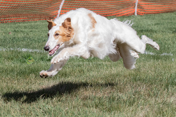 Fast Cat_Borzoi Event 04//28/19_AM_PM