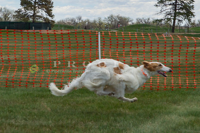 Dog Events_Specialties,Water Trials
