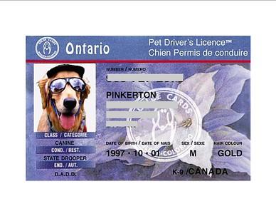 Pinkerton's driver's license