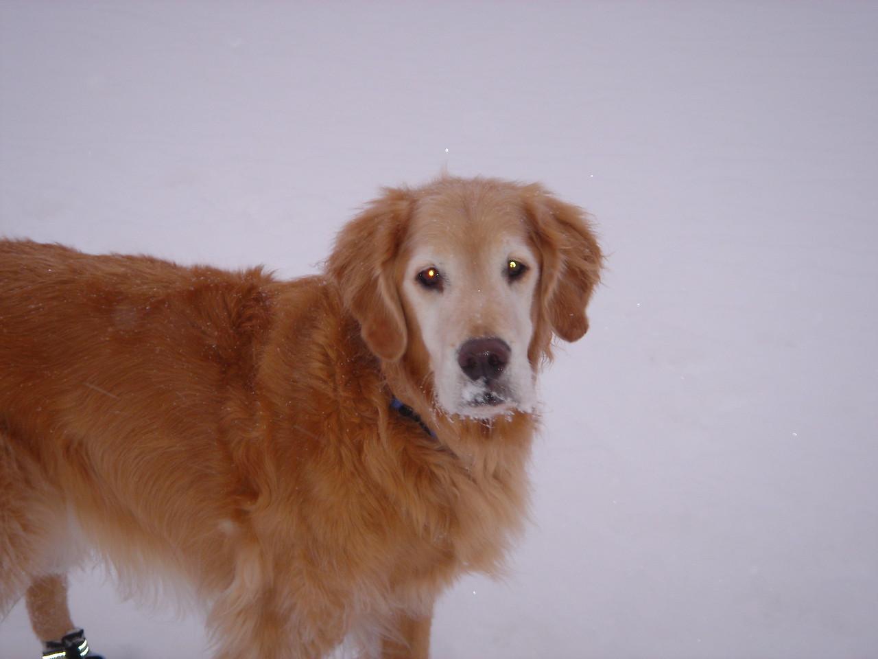 Pinkerton Jan 2007