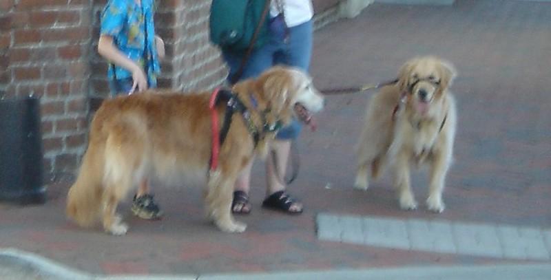 Doggies in Savannah Georgia