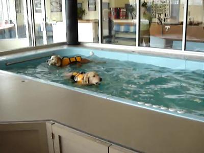 Doggies in the pool