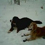doggie phone3 dec 2005.jpg