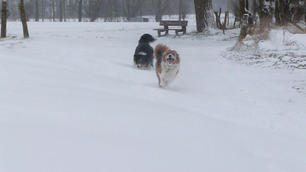 snow&dogs=FUN