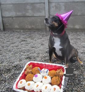 Coffy's Birthday Party