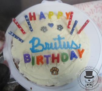 Happy 1st Birthday Brutus!