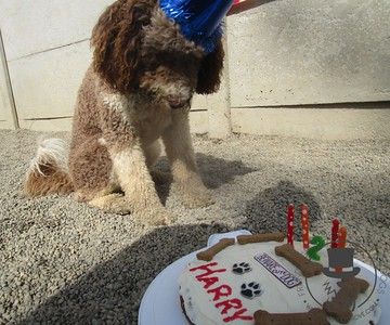 Harry's 2nd Birthday Party!