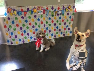 Harry's Birthday Bash