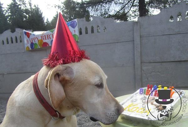 Koda's Birthday