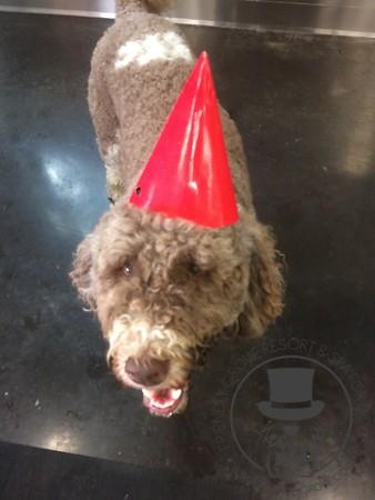 Roger's Birthday Party!