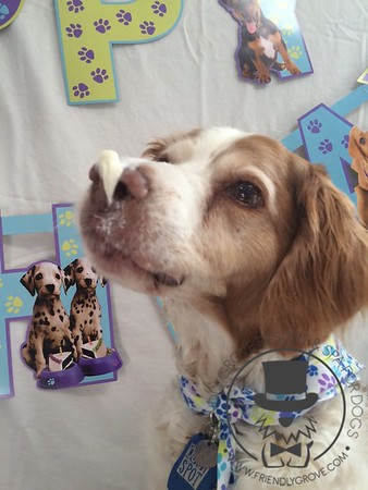 Ruger's Fabulous Birthday