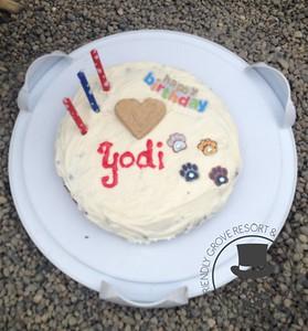 Yodi's Big Birthday!
