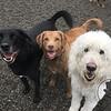 Angus, Zoey and Brennan!