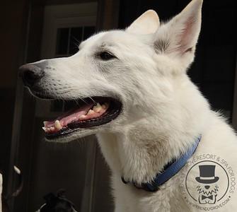 Doggy Daycare - April 2014