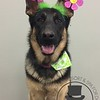 Corra is sporting some Spring attire!