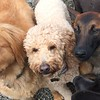 Rusty, Beatrice and Stella