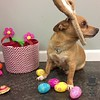 Carlos the little Easter bunny :)