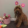 Hazel and her floral get-up!